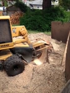 photo stump 1